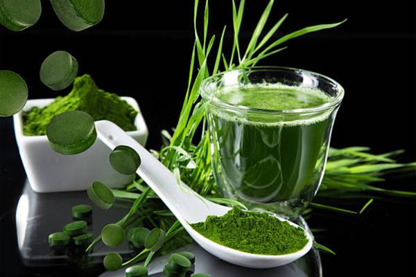 Tăng đề kháng, giảm lão hóa với tảo Spirulina và chùm ngây