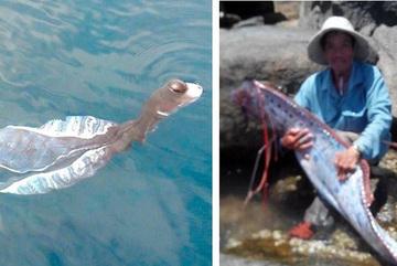 Loài 'thủy quái' xuất hiện ở Việt Nam khiến người dân khiếp sợ