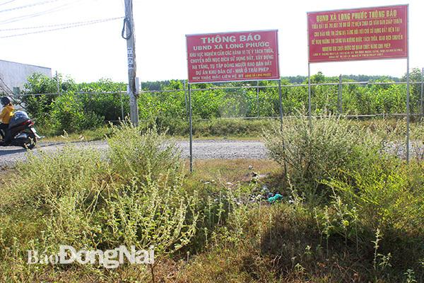 Nguyễn Thái Luyện,Dự Án Ma,Bộ Xây Dựng,Lừa Đảo,Địa Ốc Alibaba