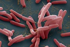 Phát hiện ca vi khuẩn Whitmore tại Bình Định