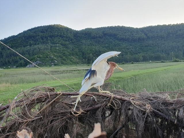 Rùng mình: Khâu mắt cò, bày la liệt trận địa tận diệt chim trời