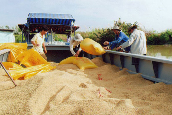 Thu hoạch hơn 5 triệu tấn, đề xuất mua dự trữ lúa gạo quốc gia