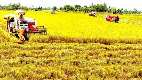 xuất khẩu gạo,nông dân,xuất khẩu nông sản,chuỗi sản xuất