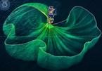 Vietnam wins 26 awards at 10th international artistic photo contest