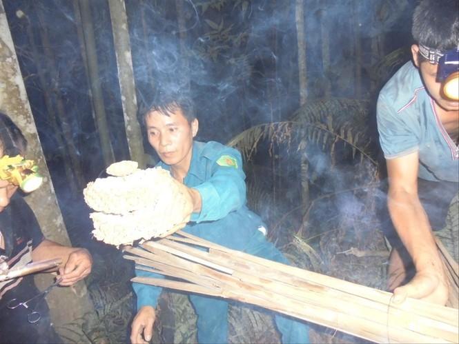 Tay thợ săn lâu năm ở Hoàng Su Phì kể chuyện đi săn loài ong cực độc