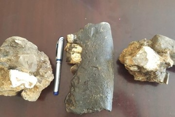 Rhino fossils discovered at Phong Nha-Ke Bang National Park