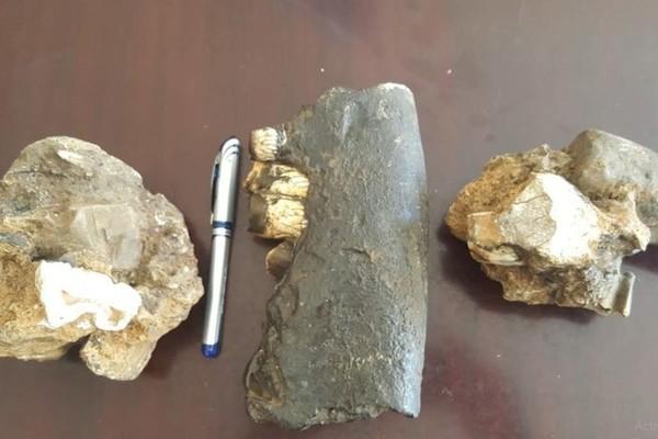 Rhino fossils discovered at Phong Nha-Ke Bang National Park