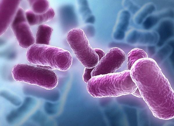 Sử dụng lợi khuẩn Bacillus - hướng đi mới giúp bảo vệ đường tiêu hóa