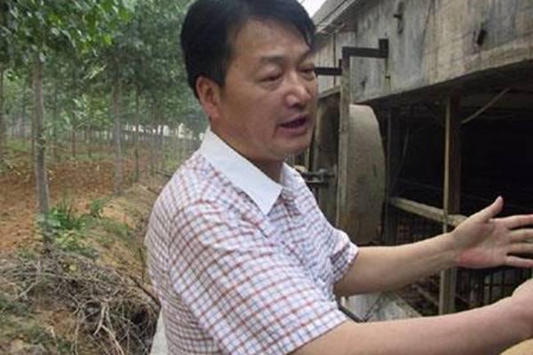 Nghỉ việc về quê nuôi 22 con lợn, nay thành đại gia khiến cả nước bất ngờ