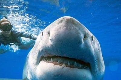Buổi hòa nhạc dưới đáy biển với khách mời là cá mập trắng