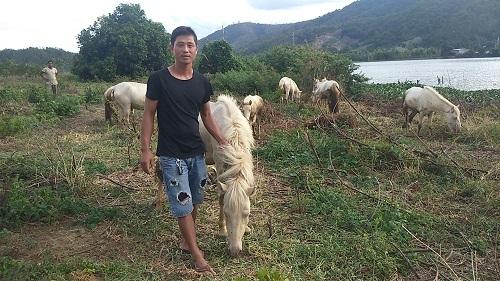 Gia Lai: Đàn ngựa mắt đỏ hàng tỷ trên 'ốc đảo' của trai 8X