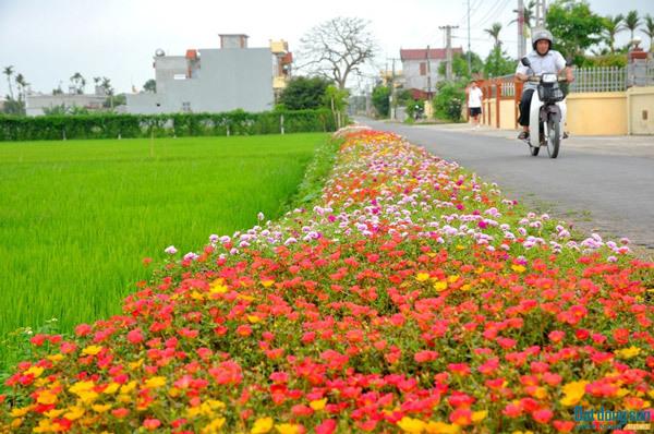 Nông thôn mới, Nam Định về đích sớm