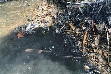 Da River water safe for use despite strange smell