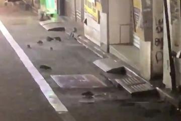 Xem chuột 'tung hoành' ở khu phố Nhật sau siêu bão