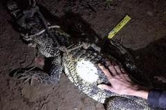 Cá sấu dài hơn 1m bò vào nhà dân ở Bình Dương