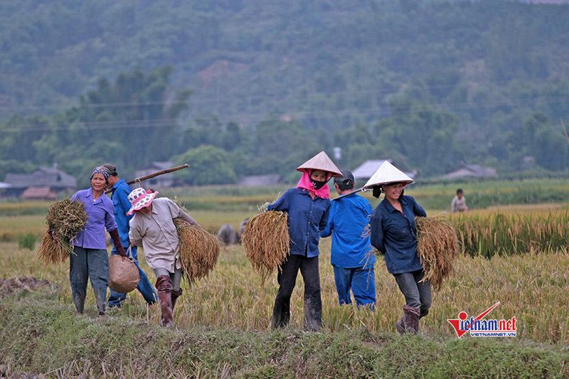 Hội Nông dân Việt Nam tích cực đẩy mạnh công cuộc xây dựng nông thôn mới