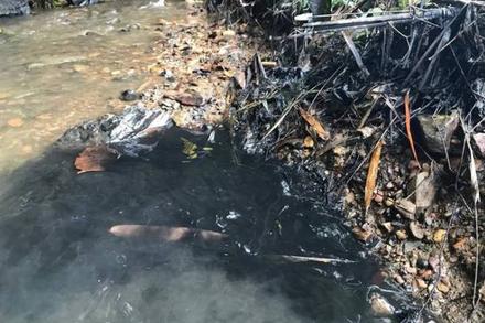 Chuyên gia cảnh báo nguy cơ tiềm ẩn khi dùng nước chứa styren