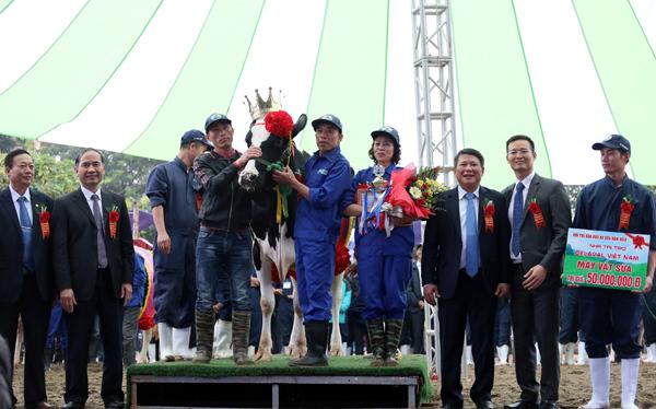 Nông dân Mộc Châu nhận gần trăm triệu nhờ bò sữa đạt Hoa hậu