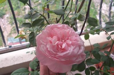 Ngày 20/10, chẳng cần hoa và quà, chỉ cần yêu bản thân là đủ
