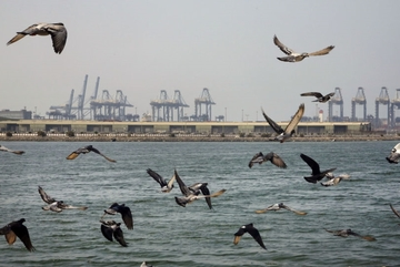 Iran tố Mỹ, Israel và Ảrập Xêút đứng sau vụ tấn công tàu dầu