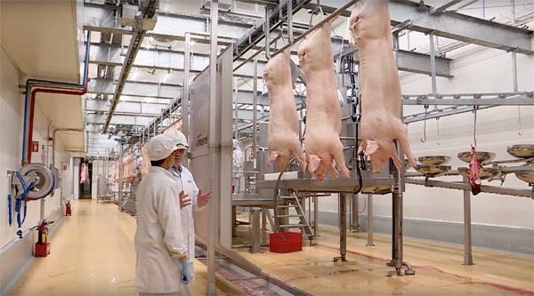 Người Sài thành hào hứng với thịt lợn mát công nghệ Châu Âu