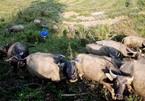 Thủ phủ thuốc phiện thành cánh đồng dược liệu tiền tỷ ở Nghệ An