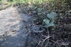 Đường đi của chất thải độc hại vào nguồn nước sạch sông Đà