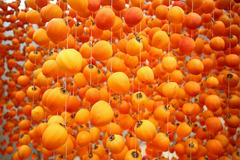 The making of dried persimmons in Da Lat