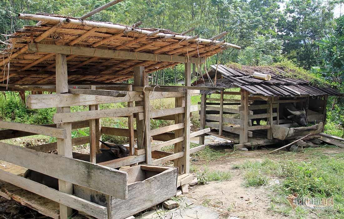 Bản biên giới thoát nghèo sau 1 năm trồng chanh leo ở Nghệ An