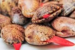 9X ở Cà Mau tung tin ăn sò lụa đỏ chết người, bị phạt 10 triệu