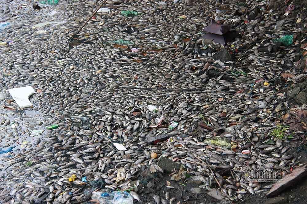Cá chết phủ kín mặt hồ ở Quảng Ninh, 4 ngày vẫn chờ lệnh thu gom
