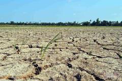 Giúp người nghèo ứng phó với biến đổi khí hậu