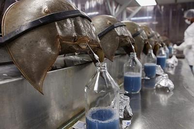 Loại máu màu xanh đắt nhất thế giới, giá hàng chục nghìn USD/lít
