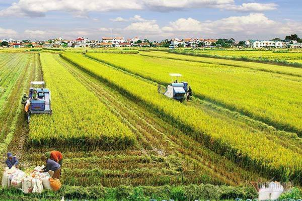 Giảm nghèo bền vững nhờ tích cực xây dựng nông thôn mới