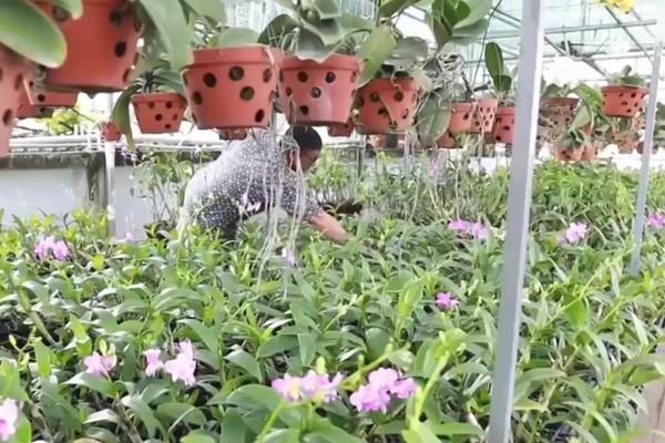 Đầu tư 400 triệu trồng lan tặng vợ