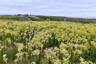 Bất ngờ lãnh nguyên Bắc Cực biến thành cánh đồng cỏ hoa rực rỡ