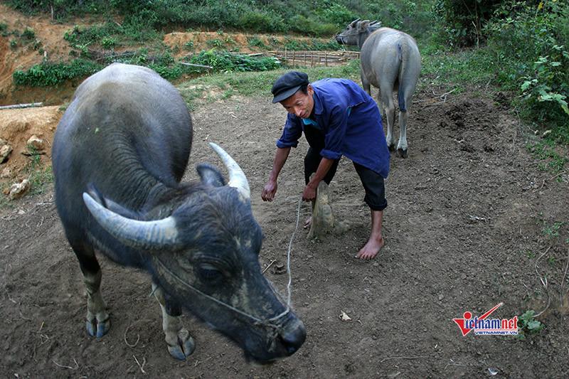 Hàng nghìn lao động nông thôn ở Tuyên Quang được đào tạo nghề trong năm 2019
