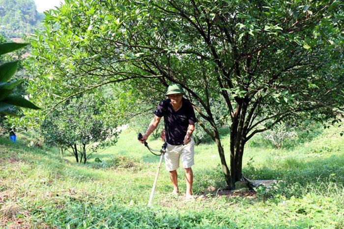 Nông dân Hà Giang đổi đời nhờ rủ nhau trồng cam sành