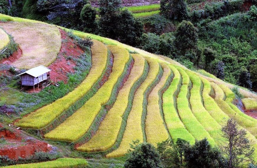 'Paradise' of terraced rice fields in Son La