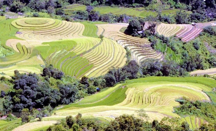 terraced rice fields in Son La,travel news,Vietnam guide,Vietnam tour,travelling to Vietnam,Vietnam travelling