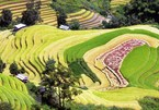 'Paradise' of terraced rice fields in Son La