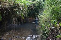 Công ty Gốm sứ nói về nữ lãnh đạo thuê người xả dầu thải sông Đà