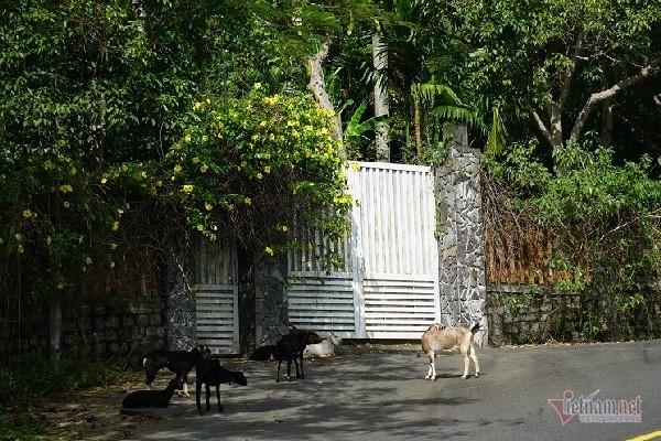 biệt thự,bán đảo Sơn Trà,Thanh tra Chính phủ,Luật Đất đai