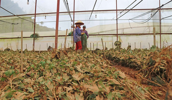 Problematic: Experts call for regulation of Da Lat's greenhouses