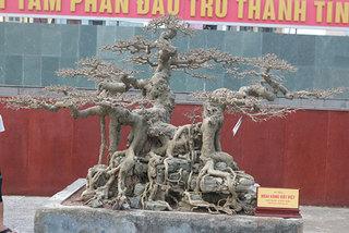 Sanh 'Ngai vàng đất Việt' mua 10 triệu, sau 15 năm trả vài tỷ không bán