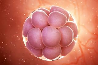 Các nhà khoa học tạo ra phôi thai mà không sử dụng tinh trùng và trứng