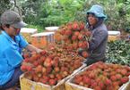 Vietnam's import-exports to top $500b