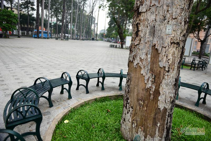 Hàng loạt cây cổ thụ 'chết đứng' ở công viên Văn Lang Sài Gòn