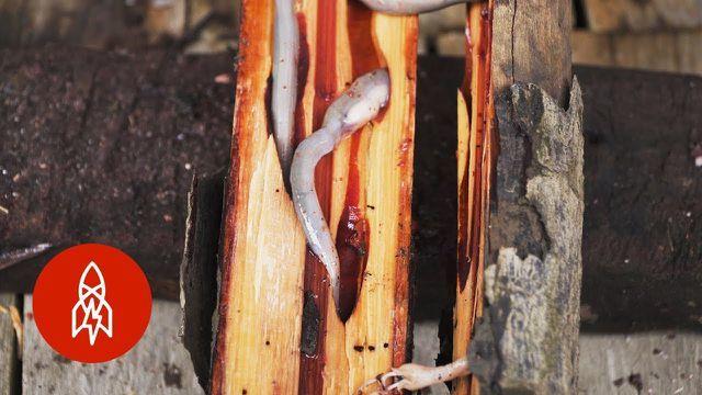 Ăn sống sâu gỗ nhầy nhụa - món đặc sản xếp hạng 'kinh dị'