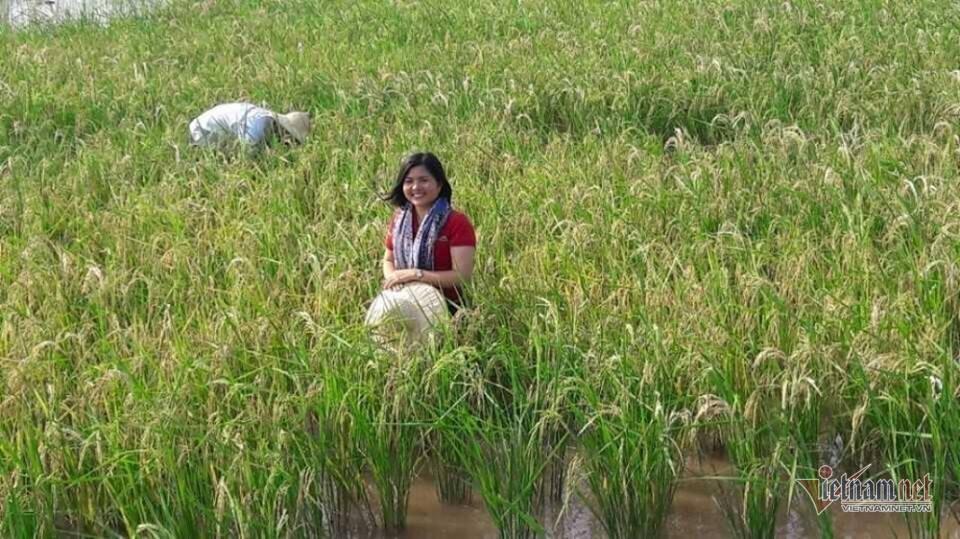 Cô gái 32 tuổi trồng lúa thảo dược thoát nghèo cho quê hương